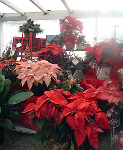 Christmas gifts, poinsettias, and holiday flowers at Chillicothe Floral