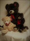 Plush Teddy Bears from Chillicothe Floral, local florist in Chillicothe, OH