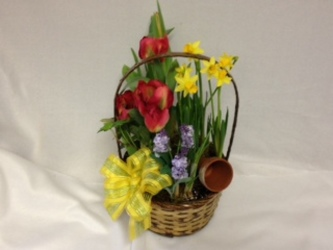 Mixed Spring Bulb Basket from Chillicothe Floral, local florist in Chillicothe, OH
