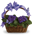 Violets and Butterflies from Chillicothe Floral, local florist in Chillicothe, OH